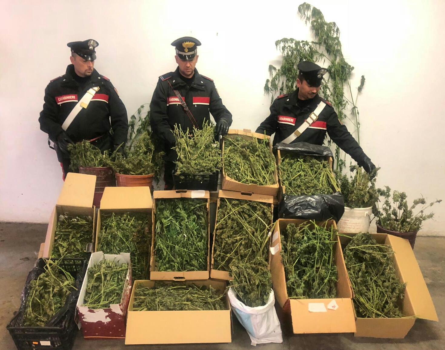 RUEGLIO - Scoperto laboratorio per la produzione di marijuana: un 42enne arrestato - VIDEO