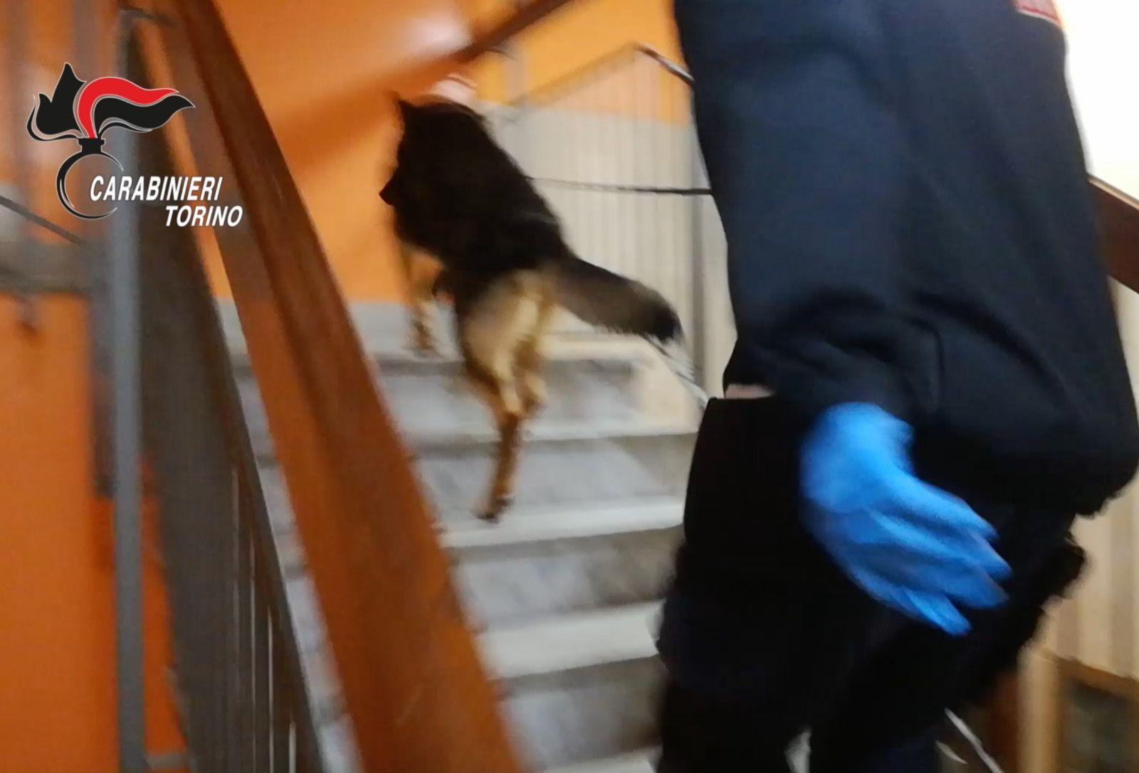 CRONACA - Chili di droga in arrivo a Torino dalla Spagna: sei arresti - VIDEO