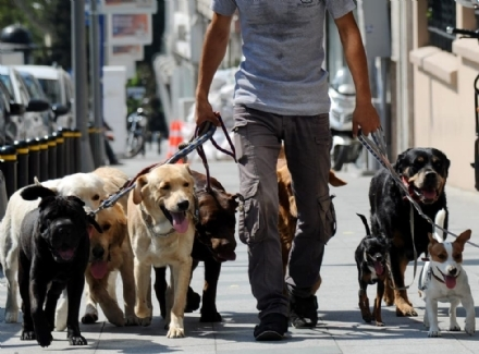 CUCCIOLI - Piemonte: è nato l'albo dei dog sitter